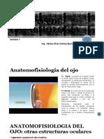 Clase I - Anatofisiologia y Patologias Del Ojo