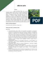 UÑA DE GATO.docx