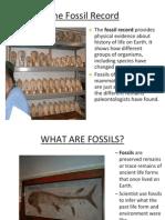 evidence for evolution slides