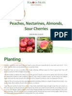 Stone Fruits Growing Guide Part Two