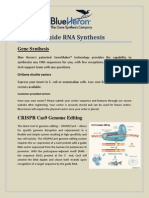 Guide RNA Synthesis