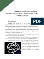 Cestodoze Produse de Forme Larvare Pentru Toate Clasele de Animale