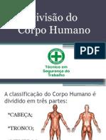 A Divisão Do Corpo Humano