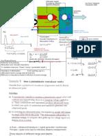 Medical Physics secondaty level slides