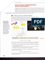 Enzimi.pdf