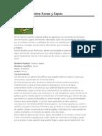 Informacion Sobre Ranas y Sapos