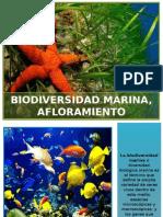 Biodiversidad Marina, Afloramiento
