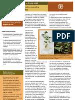 Producción de tubérculos semilla  libres de enfermedades