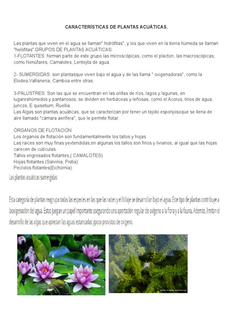 CARACTERÍSTICAS DE PLANTAS ACUÁTICAS.docx
