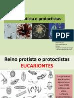 Reino Protista o Protoctistas