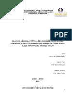 Relatório Individual Adulto piesc iii
