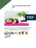 How to Grow Avokado From Seed