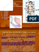 1.- Plano Sagital Medio 2.- Plano Frontal