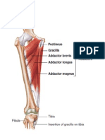 The Musculoskeletal Anatomy of the Femur