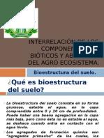 114079007-Bioestructura-Del-Suelo.pptx