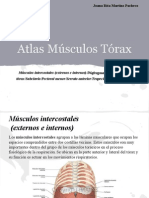 Atlas Musculatura Torax