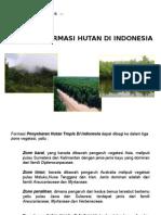 Formasi Hutan Di Indonesia