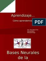Bases Neurales