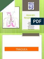 Exposicion Anatomia Terminada