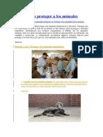Cómo Proteger a Los Animales