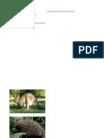 Fauna Indonesia Bagian Timur 2
