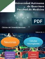 Neuronas y Glia