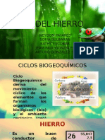 Ciclo Del Hierro2