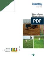 Calagem Em Pastagem Cultivada Na Amazonia - Recomendações Embrapa
