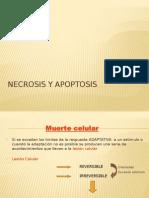 Necrosis y Apoptosis Modif Yañez