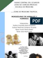 Mordeduras de animales y humanos