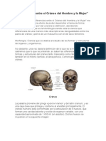 Diferencias Entre El Cráneo Del Hombre y La Mujer