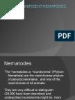 """The """"nematodes or """"roundworms"""" (Phylum Nematoda) Are"""