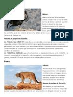 4 Animales Peligro de Extincion.docx