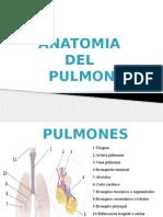 Anatomia Del Pulmonanatomia