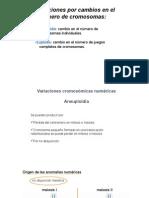 aneuplodias.pptx