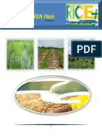9th April,2015 Exclusive ORYZA Rice E-Newsletter by Riceplus Magazine