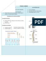 Resumen Columna Vertebral y Ms