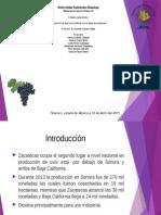 Produccion de Vid en Zacatecas