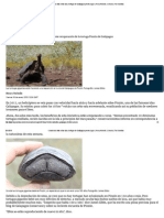 Cuando Las Ratas Están Lejos, Tortugas de Galápagos Pueden Jugar _ Henry Nicholls _ Ciencia _ the Guardian