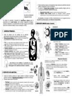 T.4.Inmunologia tsb