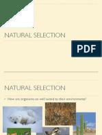 naturalselectionpresentation