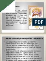 Adiposo y Nervioso