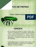 Exposición Cultivo de Pepino