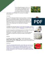 CLASES DE DROGAS.docx