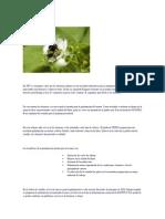 Polinización Natural