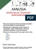 PROSES HIDUP MANUSIA TAHUN 4