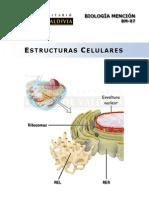 (6) Estructuras Celulares