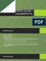 Green Algae - Chlorophyta