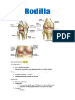 Rodilla - anatomía