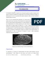 FECUNDACIÓN teoria.pdf